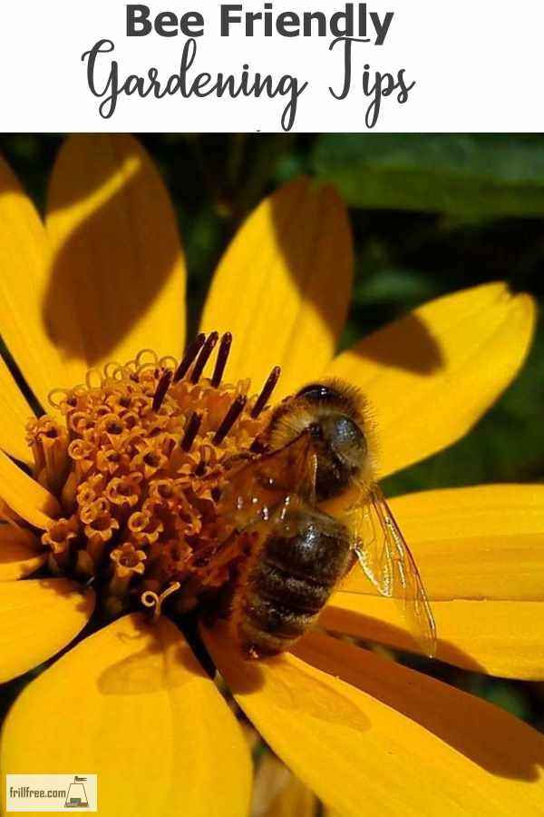 Bee Friendly Gardening Tips