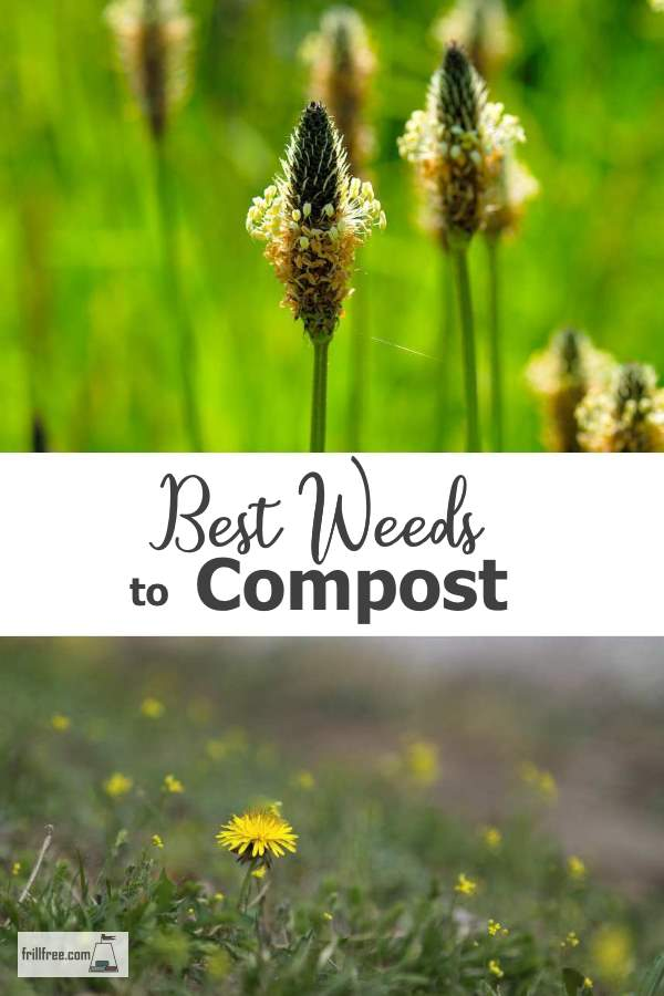 Best Weeds to Compost