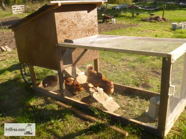 Chicken Tractor with happy chickens