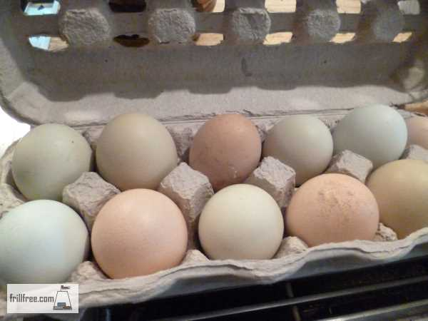 Collecting Eggs for Hatching