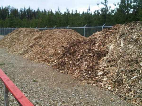 Wood chips cover the shrouds for insulation