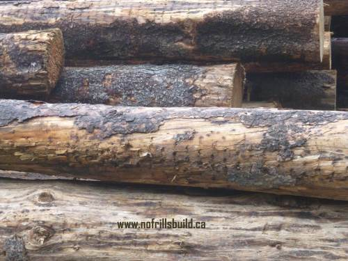Decked logs - these are cut by a feller buncher machine