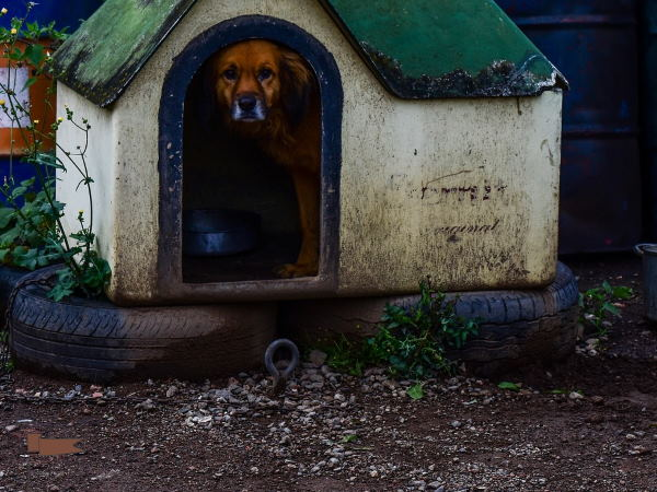 Dog House on Tires