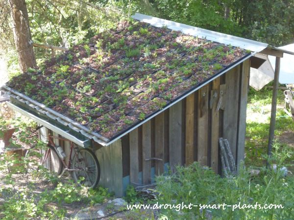 The Modular Green Roof on the Eggporeum...