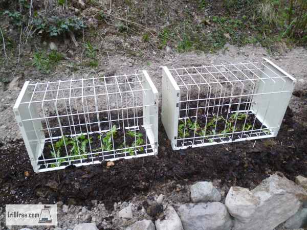 Garden Pest Protection - rabbits and cats