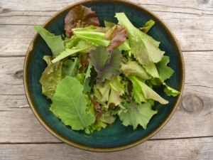 Growing tender mesclun greens