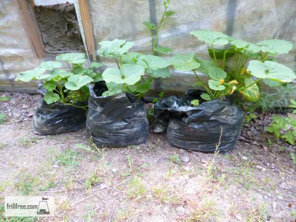 Growing Squash in Plastic