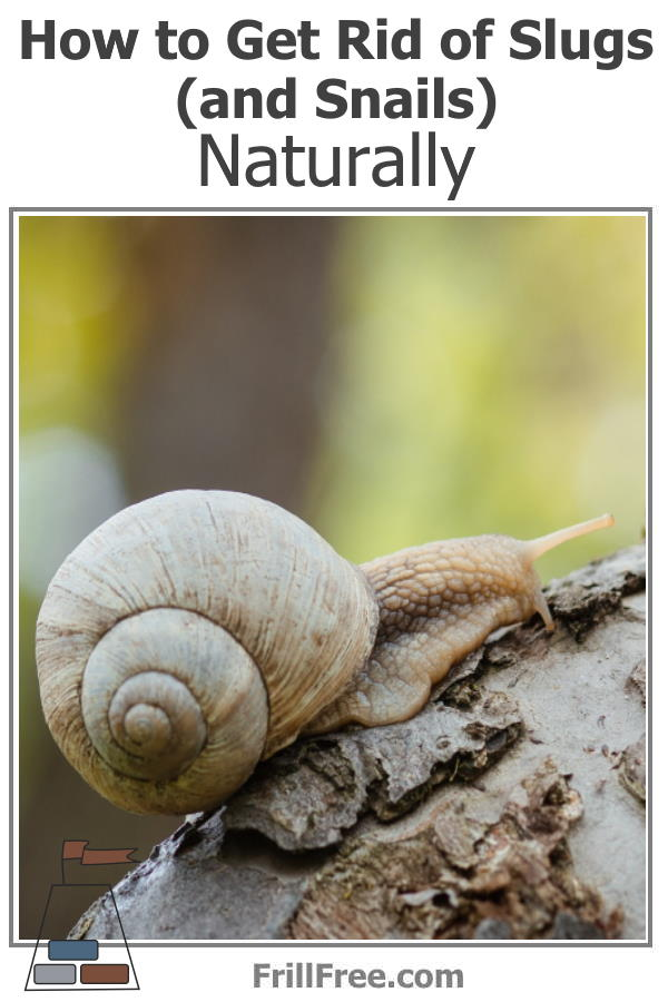 Picture of a snail on a tree
