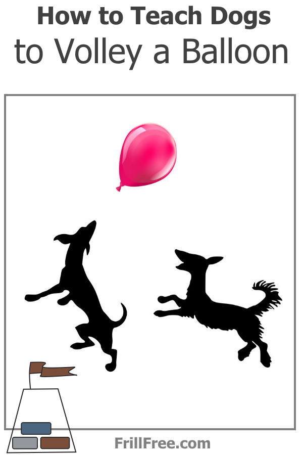 How to Teach Dogs to Volley a Balloon