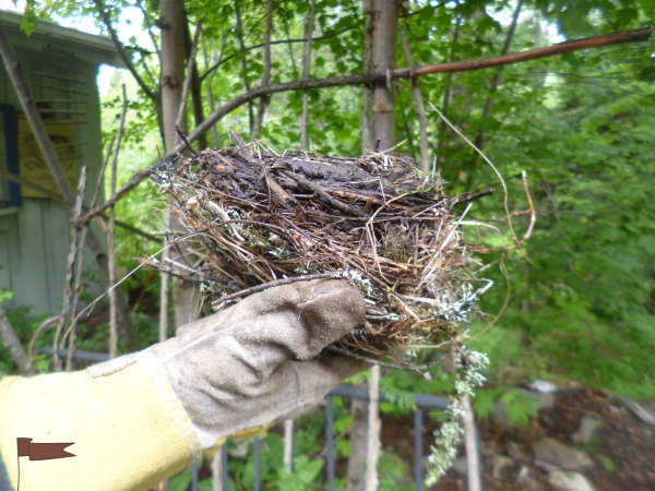 Side view of a robins nest