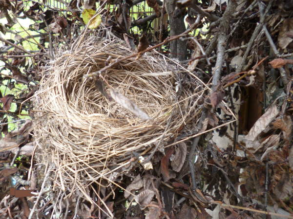 Pictured from the side, the same nest