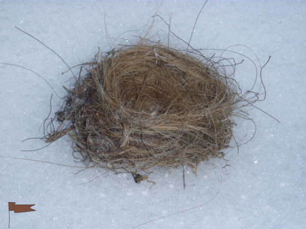 Horsehair lined birds nest