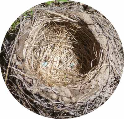 Birds know what makes a good home - natural building materials, in the vernacular style...
