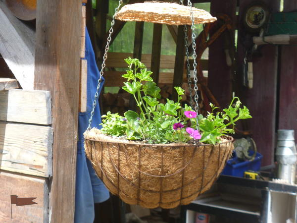 Protecting hanging baskets from hail
