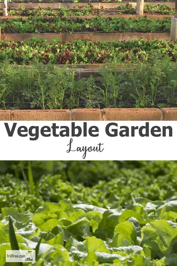 Organic Vegetable Garden Layout