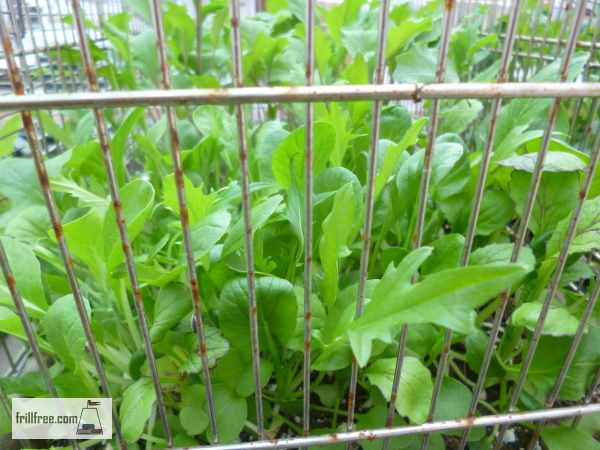 Bird Cages protect those lush delicious greens