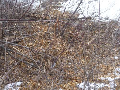 Hugelkultur - wood chips from the brushing crew