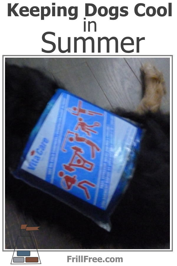 Keeping Dogs Cool in Summer
