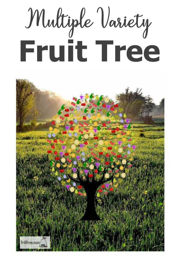 Multiple Variety Fruit Tree