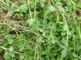 Earth Friendly Weed Control
