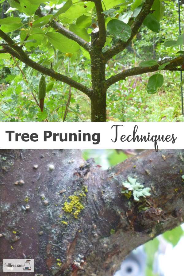 Fruit Tree Pruning Techniques